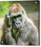 In Deep Thought Acrylic Print