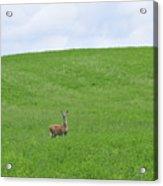 In Fields Of Green Acrylic Print