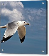 In Flight Acrylic Print