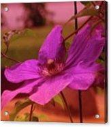 In Full Blue Blossom  Acrylic Print