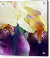 In Love With Iris Acrylic Print