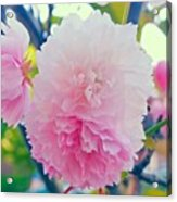 In Love With This Delicate #pink #tree Acrylic Print