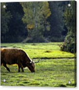 in New Forest Acrylic Print