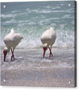 In Paired Acrylic Print