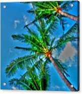 In Palms View Acrylic Print