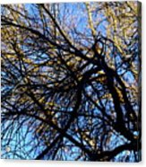 In Sunlight And In Shadow Acrylic Print