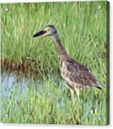 In Tall Grasses Acrylic Print