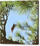 In The Big Tree Acrylic Print