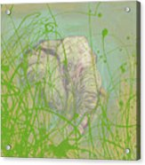 In The Brush Acrylic Print