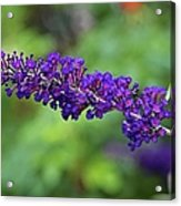 In The Butterfly Garden Acrylic Print