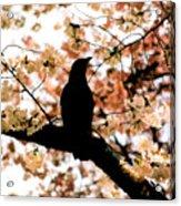 In The Cherry Tree Acrylic Print