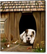 In The Dog House Acrylic Print