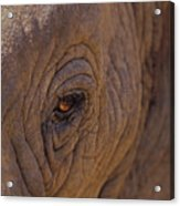 In The Eye Of The Elephant Acrylic Print