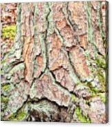 In The Forest Art Series - Tree Bark Patterns 1  Acrylic Print