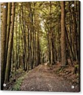 In The Forest Cathedral  Acrylic Print