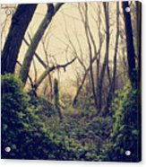 In The Forest Of Dreams Acrylic Print