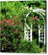 In The Garden Acrylic Print by Carolyn Marshall