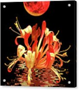 In The Heat Of The Night 2 Honeysuckle Red Moon Acrylic Print