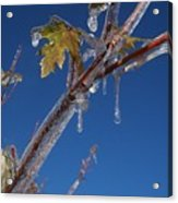 In The Ice Acrylic Print