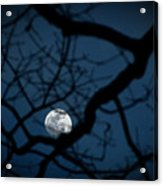 In The Light Of Night Acrylic Print