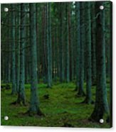 In The Middle Of The Forest Acrylic Print