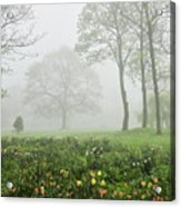In The Morning10 Acrylic Print
