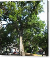 In The Neutral Ground Acrylic Print