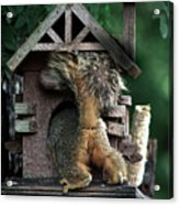 In The Nut House Acrylic Print