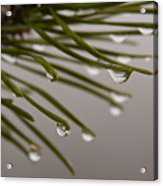 In The Rain Acrylic Print