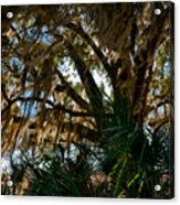 In The Shade Of A Florida Oak Acrylic Print