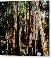 In The Trees Acrylic Print
