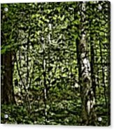 In The Woods Wc Acrylic Print