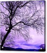 In Touch Acrylic Print