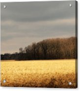 In Yonder Timber Acrylic Print
