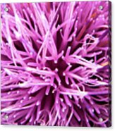 In Your Face Purple Acrylic Print