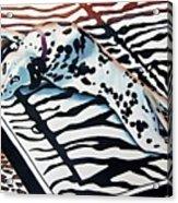 Incognito Acrylic Print