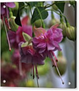 Incredible Fuschia Acrylic Print