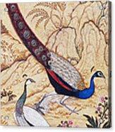 India: Peafowl, C1610 Acrylic Print