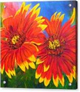 Indian Blanket Flowers Acrylic Print by Mary Jo Zorad
