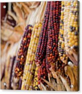 Indian Corn 6 Acrylic Print