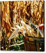 Indian Corn Acrylic Print