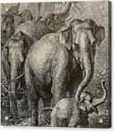Indian Elephant, Endangered Species Acrylic Print