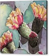 Indian Fig Cactus Acrylic Print by Regina Ammerman