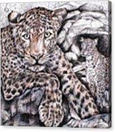 Indian Leopard Acrylic Print