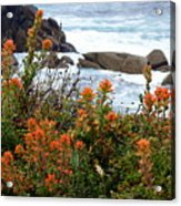 Indian Paintbrush At Point Lobos Acrylic Print