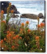 Indian Paintbrush At Point Lobos Acrylic Print