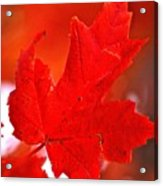 Indiana Fall Acrylic Print