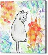 Indifferent Cat Acrylic Print