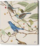 Indigo Bird Acrylic Print