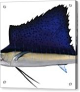Indo Pacific Saifish Acrylic Print